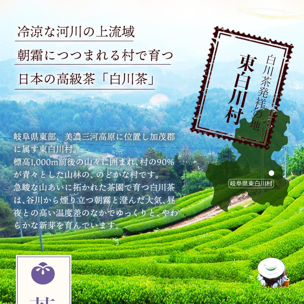 白川茶高級煎茶 香貴100g