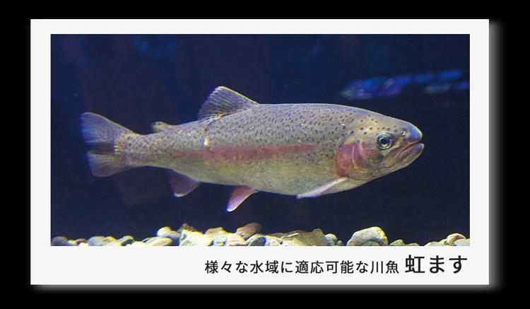 海外生まれの川魚親善大使