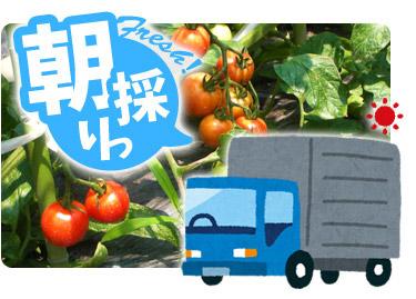朝採りフルーツトマトを積んだトラック