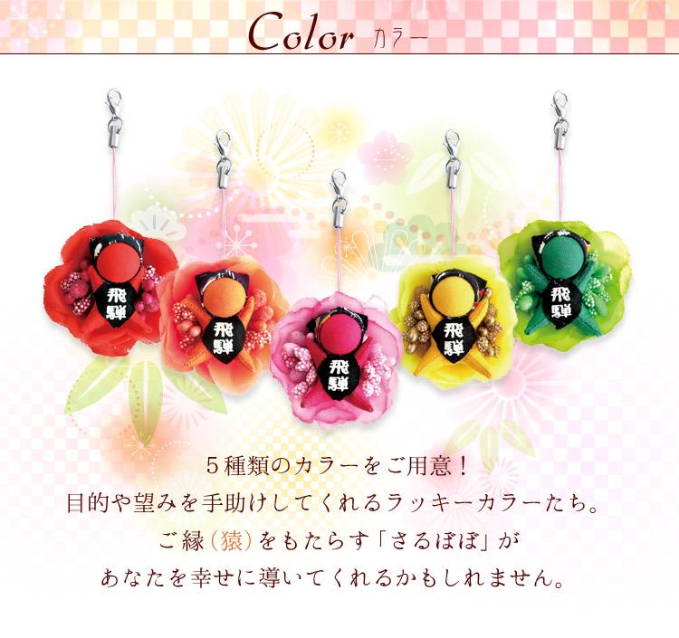カラーは5色