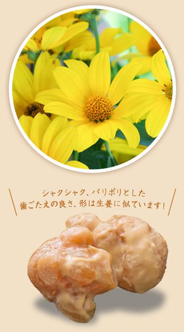 菊芋の花、根