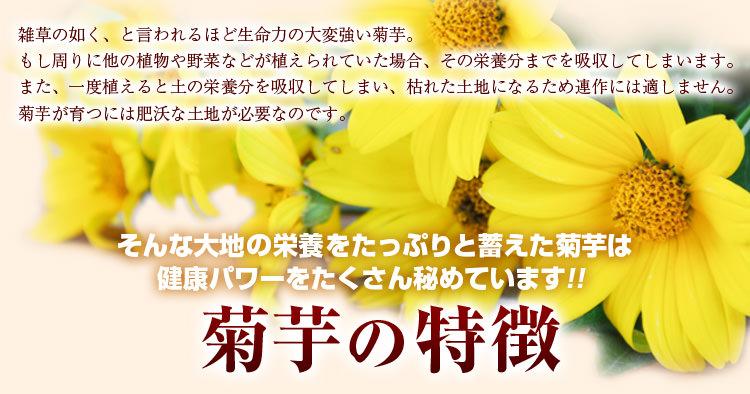 菊芋の特徴
