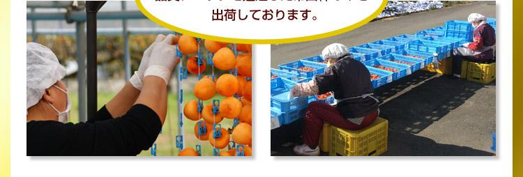ブランド干し柿3