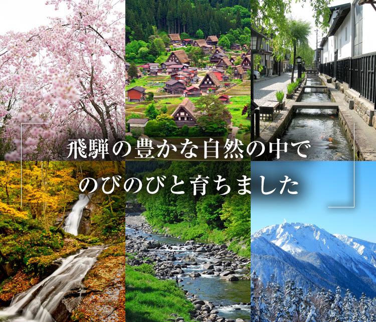 飛騨の豊かな自然